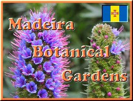 Madeira Fun Activities - Botanical Gardens - Pride of Madeira